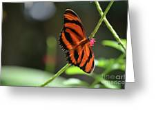 Beautiful Color Patterns To An Oak Tiger Butterfly  Greeting Card