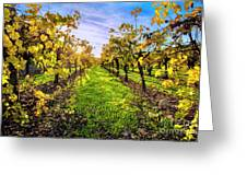 Beautiful Colors On The Vines Greeting Card