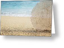 Beautiful Coral Element 1 Greeting Card