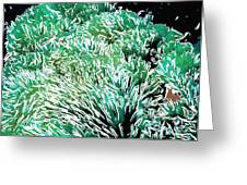 Beautiful Coral Reef 2 Greeting Card