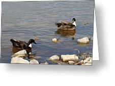 Beautiful Ducks Greeting Card