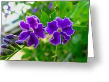 Beautiful Duranta Flower Blossoming Greeting Card