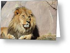 Beautiful Face Of A Lion In The Warm Sunshine Greeting Card