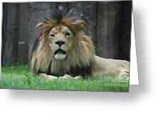 Beautiful Face Of A Male Lion With A Thick Fur Mane Greeting Card