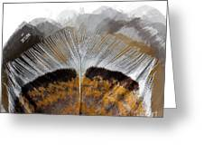 Beautiful Feather Greeting Card