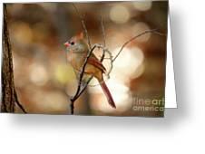 Beautiful Female Cardinal Greeting Card