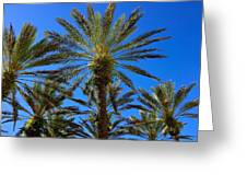 Beautiful Florida Palm Trees Greeting Card