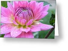 Beautiful Flower In Daybreak Greeting Card