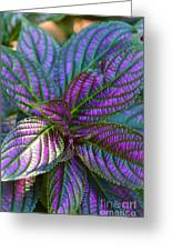 Beautiful Foliage  Greeting Card