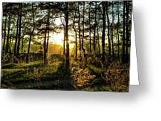 Beautiful Forest At Sunrise Greeting Card
