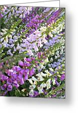 Beautiful Foxglove Greeting Card