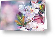 Beautiful Fruit Tree Blooming Greeting Card