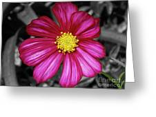 Beautiful Fuchsia Flower Greeting Card