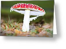 Beautiful Fungus Greeting Card