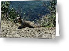 Beautiful Ground Squirrel Standing At The Edge Of The Coast Greeting Card