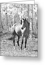 Beautiful Horse In Black And White Greeting Card