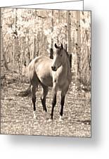 Beautiful Horse In Sepia Greeting Card