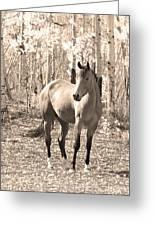 Beautiful Horse In Sepia Greeting Card