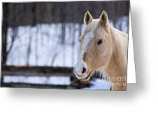 Beautiful Horse Greeting Card