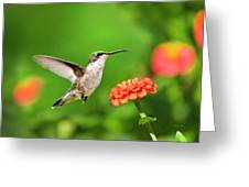 Beautiful Hummingbird Greeting Card