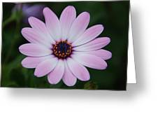 Beautiful In Pink Today Greeting Card