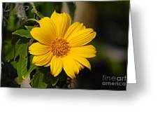 Beautiful In Yellow Greeting Card