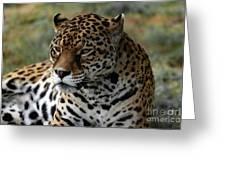 Beautiful Jaguar Portrait Greeting Card