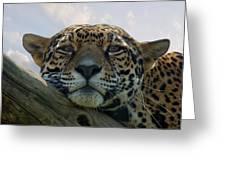 Beautiful Jaguar Greeting Card