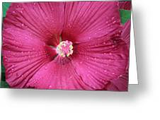Beautiful Large Hibiscus Greeting Card