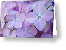Beautiful Lavender Purple Hydrangea Flowers Baslee Troutman Greeting Card