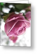 Beautiful Lavender Rose 2 Greeting Card