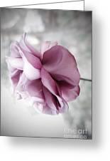 Beautiful Lavender Rose Greeting Card