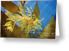 Beautiful Leafy Sea Dragon Greeting Card by Brooke Roby