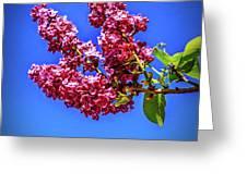 Beautiful Lilac Greeting Card