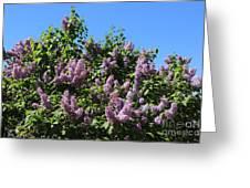 Beautiful Lilacs Day Greeting Card