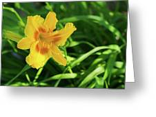 Beautiful Lily Greeting Card
