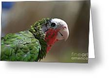 Beautiful Look At At The Profile Of A Conure Parrot Greeting Card