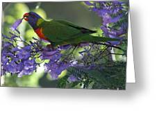 Beautiful Lorikeet Greeting Card