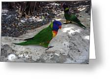 Beautiful Lorikeets Greeting Card