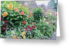 Beautiful Lot Of Dahlias,butchart Gardens,victoria,canada Greeting Card
