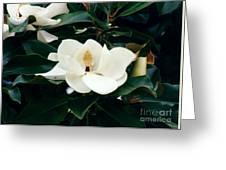 Beautiful Magnolia  Greeting Card