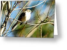Beautiful Mockingbird Greeting Card