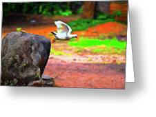 Beautiful Moment With A Bird Take Off , Wall Frame, Art Greeting Card
