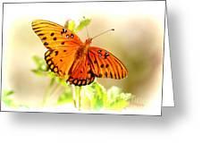 Beautiful Gulf Fritillary Greeting Card by Donna Bentley
