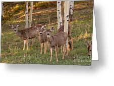 Beautiful Mule Deer Herd Greeting Card