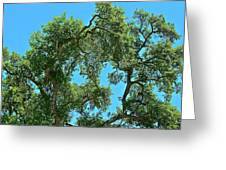 Beautiful Oak Greeting Card