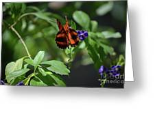 Beautiful Oak Tiger Butterfly On Purple Flowers Greeting Card
