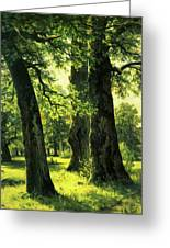 Beautiful Oak Trees Reach To The Skies Greeting Card