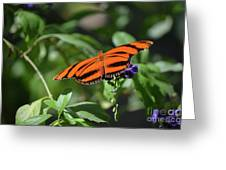 Beautiful Orange Oak Tiger Butterfly In Nature Greeting Card
