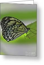 Beautiful Paper Kite Butterfly On A Green Leaf Greeting Card